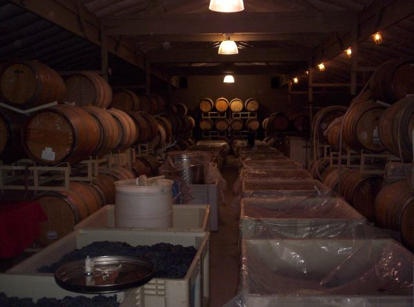 Production underway inside of barrel room of el Sol winery
