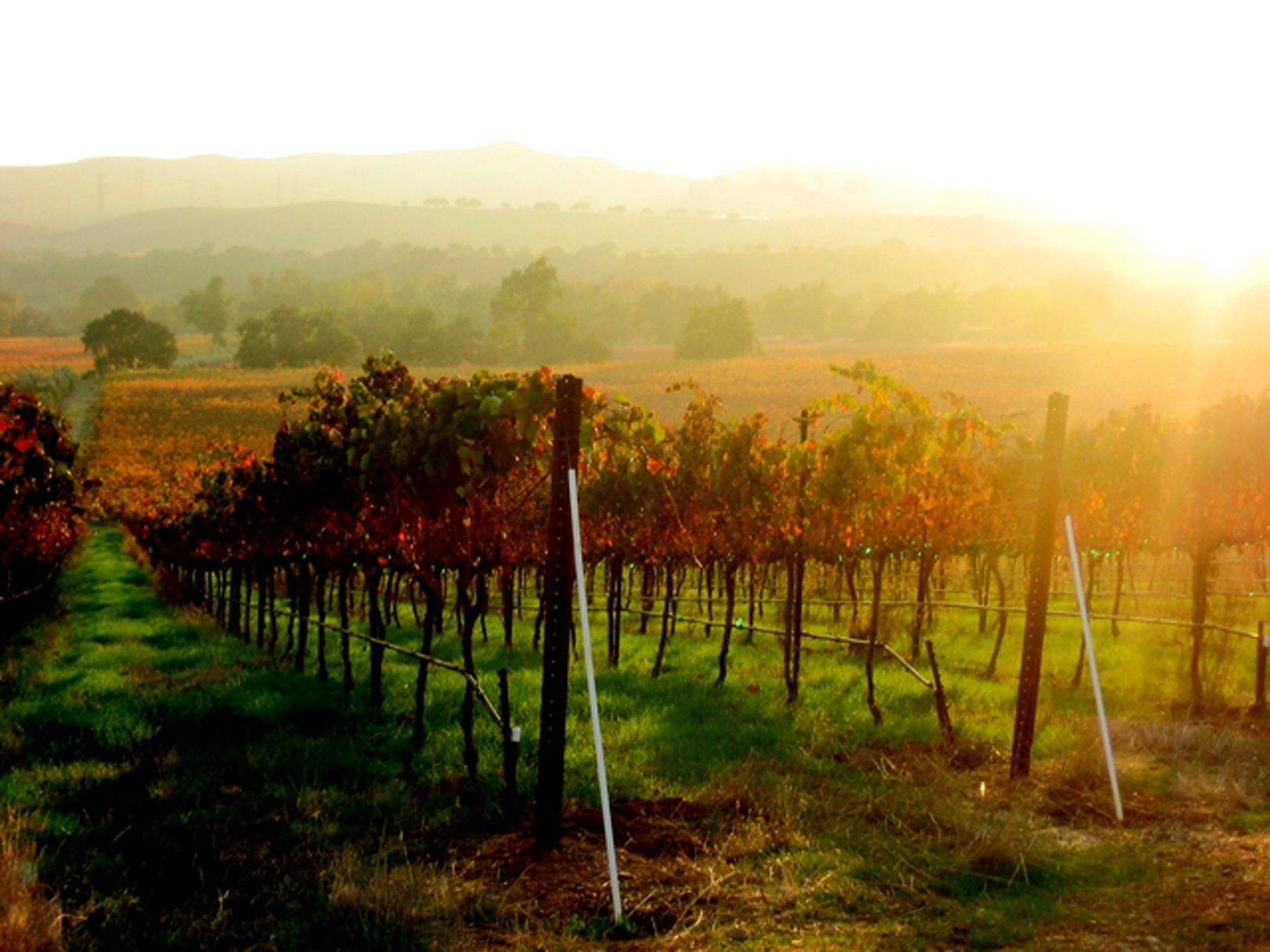 Livermore wine cycle getaway tri valley california for California wine